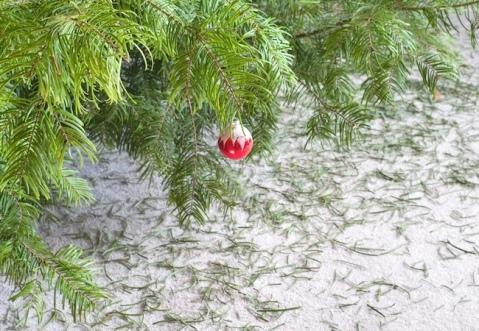 taking-down-the-christmas-tree.jpg