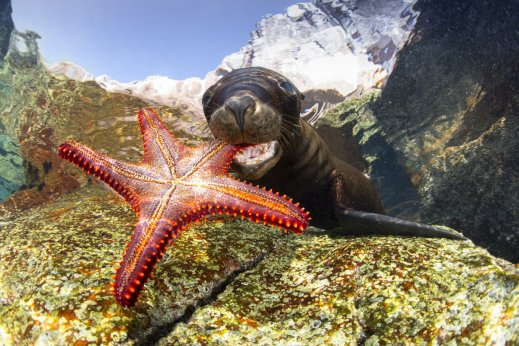 sea-lion-playing-with-starfish-by-francis-prez